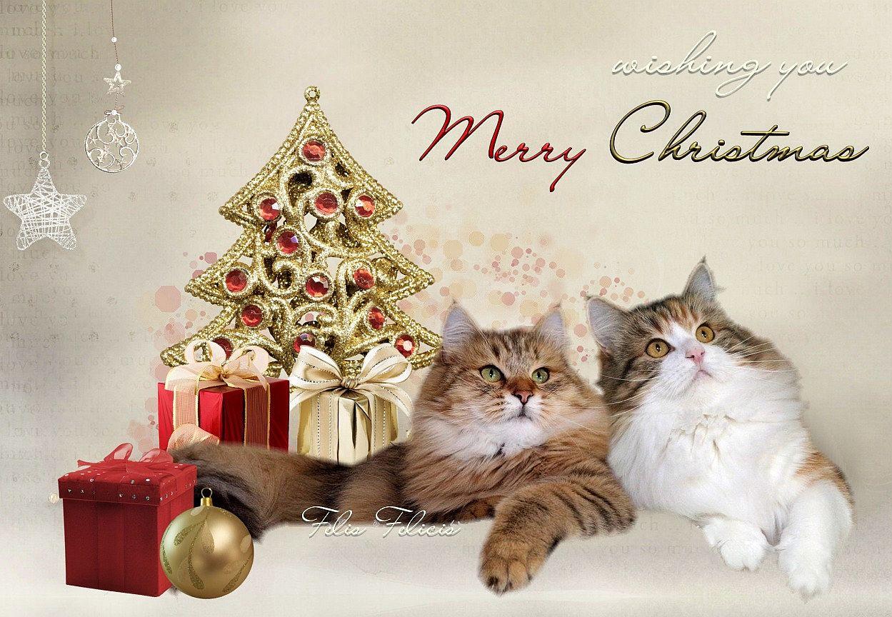 Veselé Vianoce v rodinnom kruhu praje Felis Felicis 39cacb9a8b7