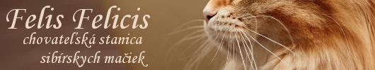 sibírske mačky Felis Felicis